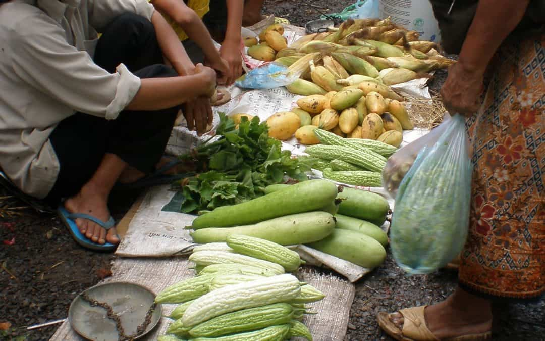 QSA Notes: Food security: the family farmer and the global food system